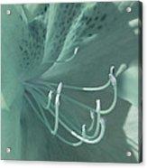 Azalea Hue1 Acrylic Print