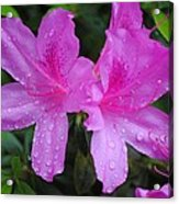 Azalea's In Spring Rain #1 Acrylic Print
