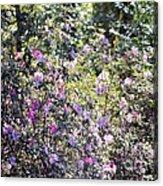 Azaleas In The Forest Acrylic Print