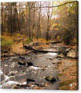 Babbling Brook In Autumn Acrylic Print