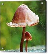Baby And Parent Mushroom Acrylic Print
