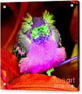Baby Bird Of A Different Color Acrylic Print