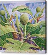 Baby Breadfruit Acrylic Print