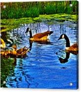 Baby Ducks Acrylic Print by Sergio Aguayo