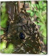 Baby Eastern Cottontail Rabbit Dmam011 Acrylic Print