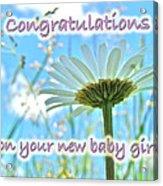 Baby Girl Congratulations Greeting Card - Oxeye Daisies Acrylic Print