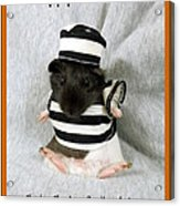Baby Guinea Pig Trick Or Treat Acrylic Print