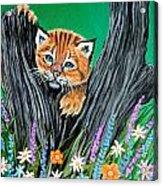 Baby Lynx Acrylic Print
