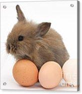 Baby Rabbit With Eggs Acrylic Print