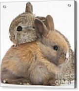 Baby Rabbits Acrylic Print by Mark Taylor