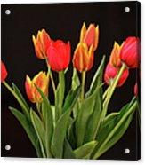 Baby Tulips Acrylic Print