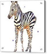 Baby Zebra Nursery Animal Art Acrylic Print