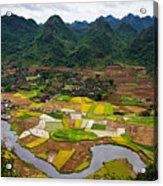 Bac Son Rice Field Acrylic Print