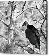 Back In Black Acrylic Print
