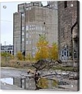 Back Of Warehouse Branches 1 Acrylic Print