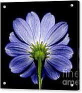 Backside Of A Blue Flower Acrylic Print