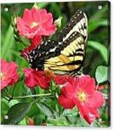Backyard Beauty Acrylic Print