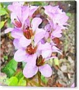 Backyard Blooms Acrylic Print