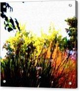 Backyard Hues Acrylic Print