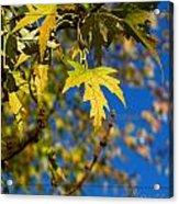 Backyard Leaves Acrylic Print