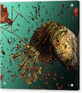 Bacteriophage Viruses Acrylic Print by Karsten Schneider