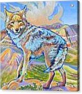 Badland Coyote Acrylic Print