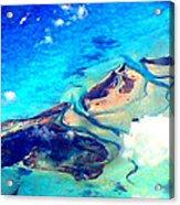 Bahama Out Island Filtered Acrylic Print