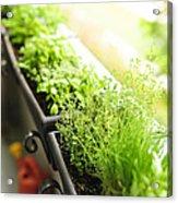 Balcony Herb Garden Acrylic Print by Elena Elisseeva