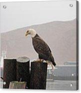 Bald Eagle On Piling Acrylic Print
