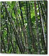 Bamboo 2 Acrylic Print