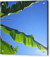 Banana Leaf In The Sky Acrylic Print
