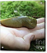 Banana Slug On Hand Acrylic Print