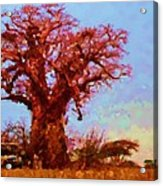 Baobab Tree Acrylic Print