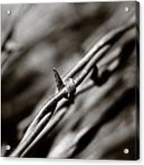 Barbbed Wire 1 Acrylic Print