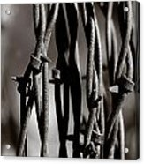 Barbbed Wire 2 Acrylic Print