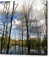 Bare Trees And Sky Acrylic Print