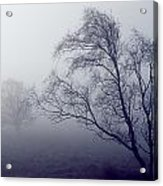 Bare Trees In Thick Fog, Peak District Acrylic Print