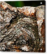 Bark Acrylic Print by Christopher Gaston