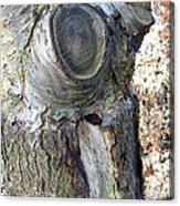 Bark IIi Acrylic Print