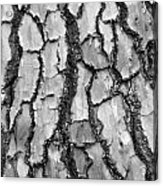 Barking Up The Wrong Tree Acrylic Print