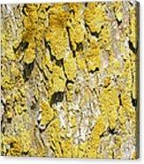 Barky View Acrylic Print