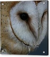 Barn Owl Closeup Acrylic Print