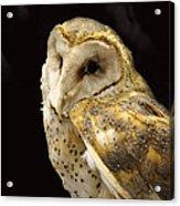 Barn Owl In A Dark Tree Acrylic Print