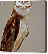 Barn Owl Of Michigan Acrylic Print