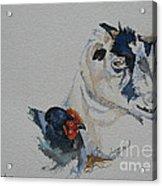 Barnyard Buddies Acrylic Print