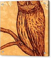 Barred Owl Coffee Painting Acrylic Print