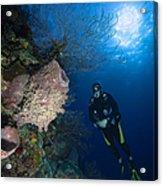 Barrel Sponge And Diver, Belize Acrylic Print
