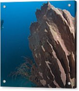 Barrel Sponge And Diver, Papua New Acrylic Print