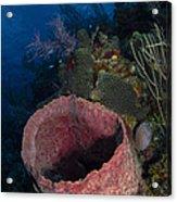 Barrel Sponge Seascape, Belize Acrylic Print