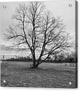 Barren Tree On A Winters Day Acrylic Print